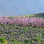 secteurs-dactivite-selerys-qwatmos-meteo-dependants-Arboriculture